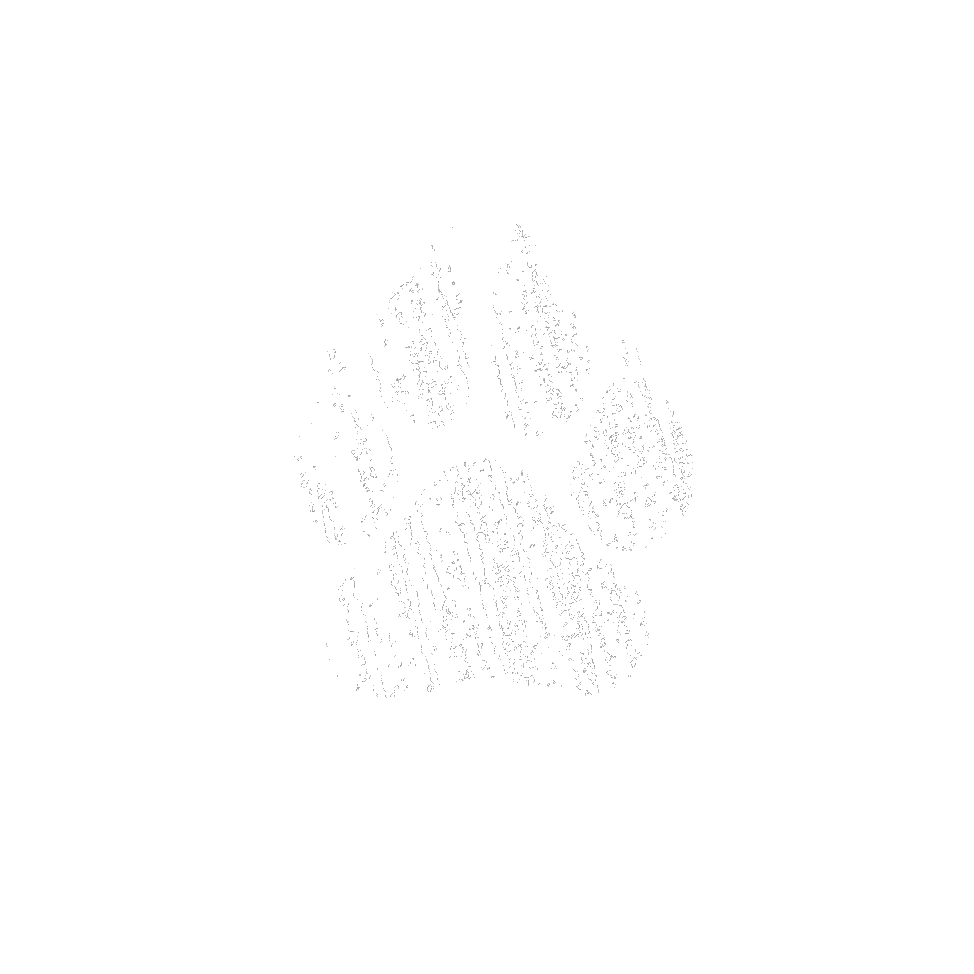 Bear Dog Bicycles